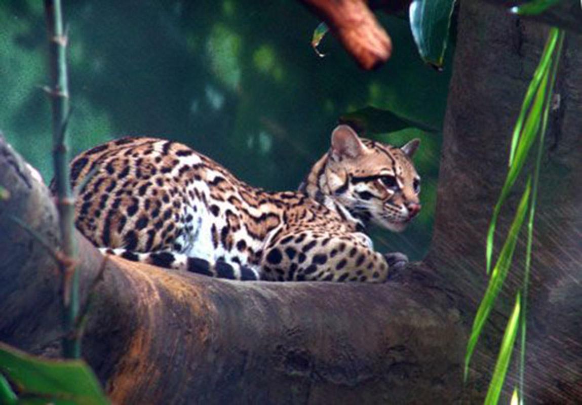 Terra Paradise Eco-Adventure Resort is home to New Species